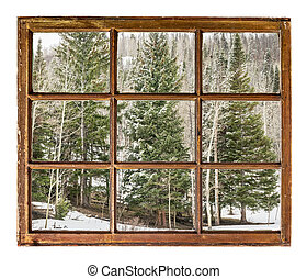 spruce and aspen in winter