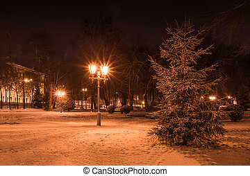 Spruce and lantern in the park at night in winter