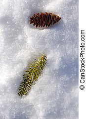 Spruce Branch and Pine Cone