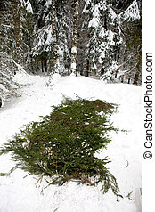 Spruce Branch Tent Base