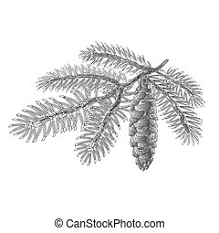 Spruce branch with cone as vintage engraving Vector.eps