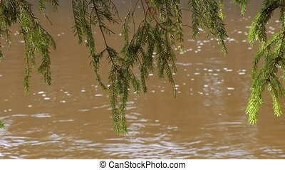spruce branches on the background of the river flow.