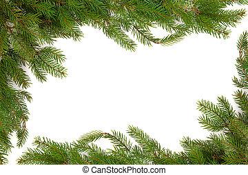Spruce Fir Pine Border - Christmas spruce fir pine border...