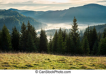 beautiful autumn scenery in mountains at sunrise - spruce...