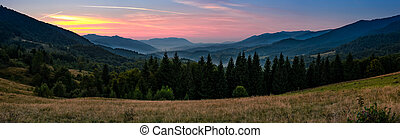 spruce forest in mountains at dusk