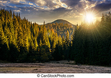 spruce forest in mountains at sunset