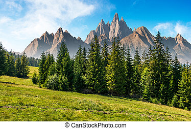 spruce forest in mountains with rocky peaks - spruce forest...