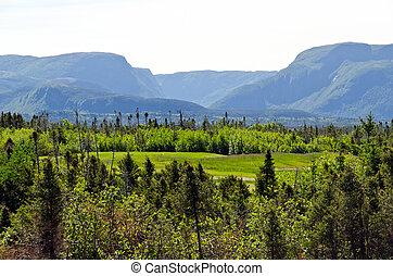 Gros Morne National Park - Spruce forest in the Gros Morne...