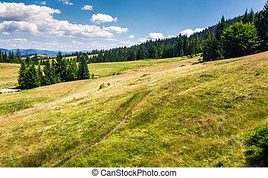 spruce forest on a grassy hillside. beautiful summer...