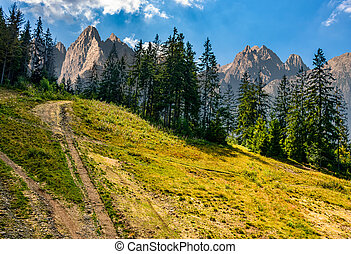 Spruce forest on a hill in High Tatras - Composite image...