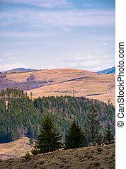 spruce forest on a hillside in springtime. lovely...