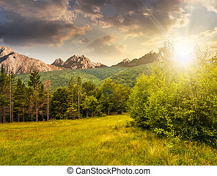 Spruce forest on a meadow in Tatras at sunset - Composite...