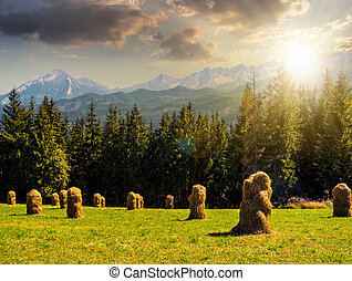 Spruce forest on a meadow in Tatras at sunset - Spruce...