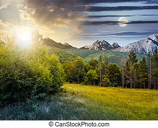 Spruce forest on a meadow in Tatras - Day and night time...