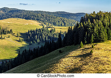 spruce forest on a mountain hill side - mountain rural...
