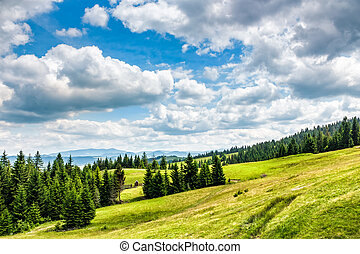 spruce forest on a mountain hill side - mountain summer...