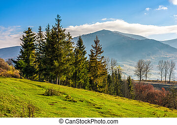 spruce forest on a mountain hillside - autumn slope of...