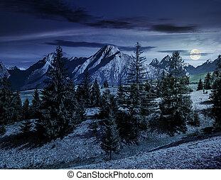 spruce forest on grassy hillside in tatras at night -...