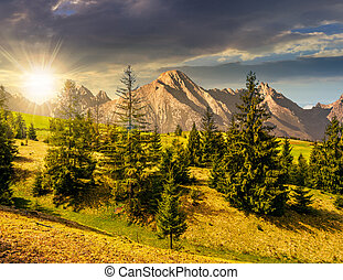 spruce forest on grassy hillside in tatras at sunset -...