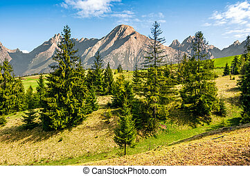 spruce forest on grassy hillside in tatras - Composite...