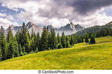 spruce forest on grassy slope. composite landscape with High...