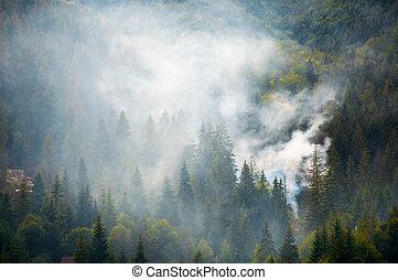 spruce forest on hillside in smoke. lovely nature disaster...