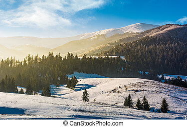 spruce forest on snowy hills. gorgeous winter landscape in...