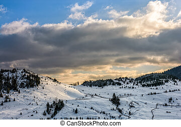 spruce forest on snowy meadow - spruce forest on a meadow...