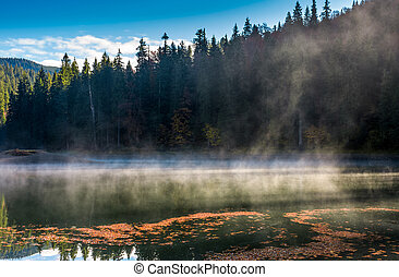 spruce forest on the bank of boiling lake at sunrise in...