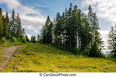 spruce forest on the hillside. sunny summer day with blue...