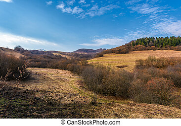 spruce forest on top of a hill in springtime. slopes without...