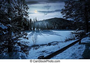 spruce forest on winter night in full moon light. lovely...
