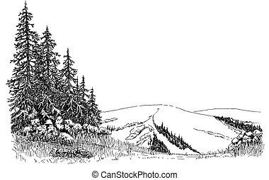 Spruce on a hill - Sitka Spruce in Alaska