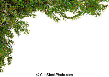 Spruce Pine Border - Spruce pine border isolated over white...