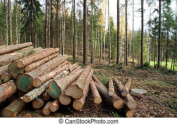 Spruce Timber piled up in forest after felling, ready for transport. Photographed in Salo, Finland.
