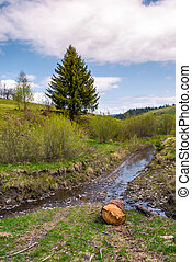 spruce tree and log near the brook. nature scenery with...