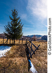 spruce tree near the fence in mountains. beautiful...