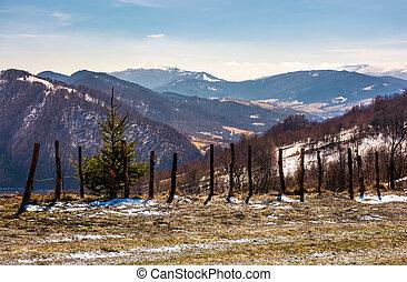 spruce tree near the fence on a hillside in springtime....
