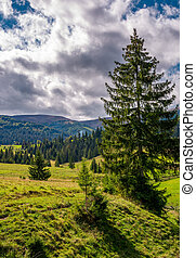 spruce tree on a grassy slope under cloudy sky. beautiful...