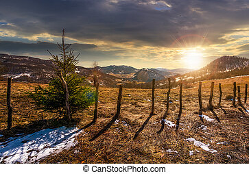 spruce tree on a hillside in springtime at sunset. beautiful...