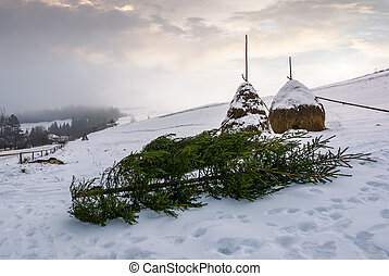 spruce trees and haystacks on snowy hillside - spruce tree...