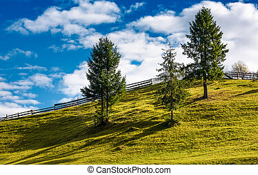 spruce trees and wooden fence on grassy hillside. lovely...