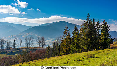 spruce trees at Volovets serpentine in Carpathians - Spruce...