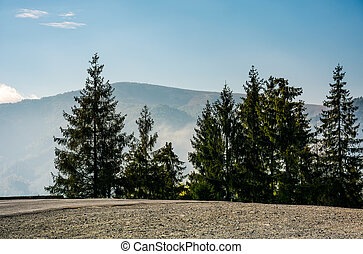 spruce trees by the road in high mountains