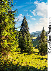spruce trees on grassy hill above the valley with river in...