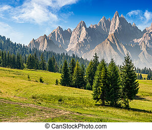 spruce trees on grassy hillside in mountains