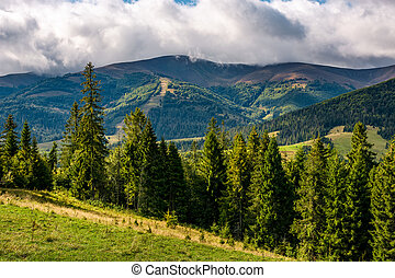 spruce trees on hillside on cloudy day. gorgeous weather in...