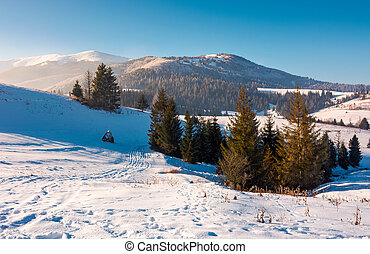 spruce trees on snowy hillside. beautiful frosty day....