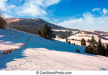 spruce trees on sunny winter day. beautiful countryside in...
