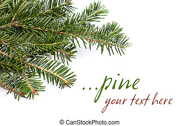 Spruce twig - Detail of a green spruce twig on picture's...
